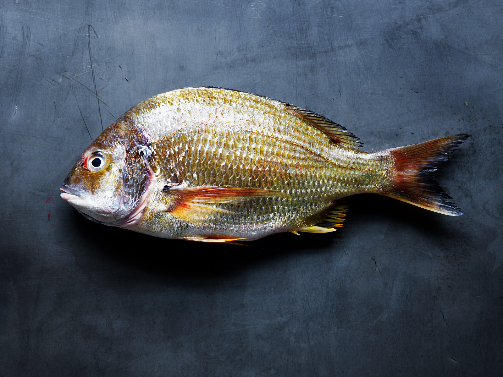 20140324Yellow-Fin-Bream